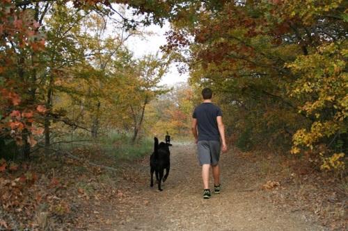 walk-in-woods